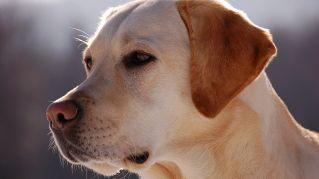 I cani più famosi del pianeta: molti sono star della Tv