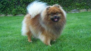 I cani a pelo lungo più belli e affettuosi presenti al mondo
