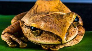 Gli anfibi più pigri al mondo: dal tritone alla rana