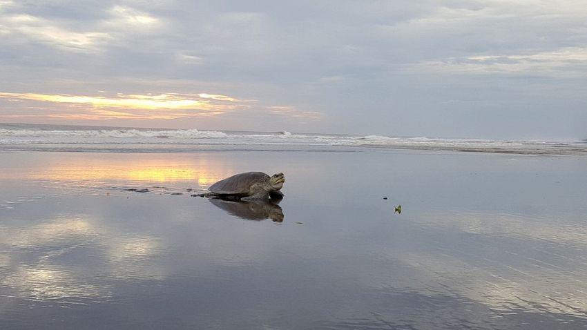 Sono più veloci le tartarughe marine o quelle di terra?