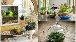 Questi giardini in miniatura renderanno uniche le vostre case
