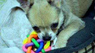 5 giochi fai da te per cani: per divertirsi e uscire insieme