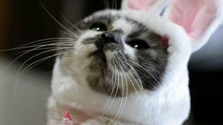 Gallery dei costumi per gatti più assurdi del pianeta