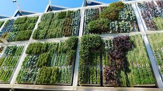Idee per giardino verticale d'appartamento: qualche consiglio