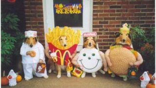 I costumi per cani più assurdi mai visti fino ad ora