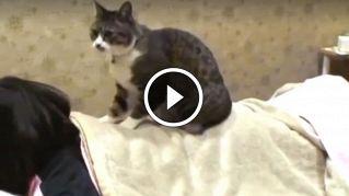 In Giappone il fisioterapista è un gatto e i risultati sono incredibili