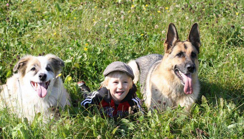 12 motivi per cui i bambini devono vivere con un cane