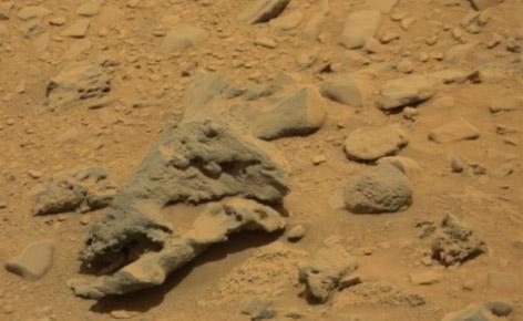 Curiosity trova il teschio di un dinosauro sulle sabbie di Marte
