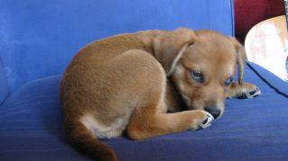 Adottare un cane riduce le tasse, accade in provincia di Grosseto
