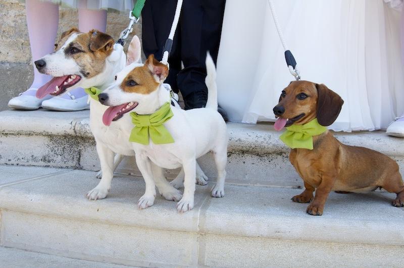 Sposi e cani insieme nel momento più bello della loro vita