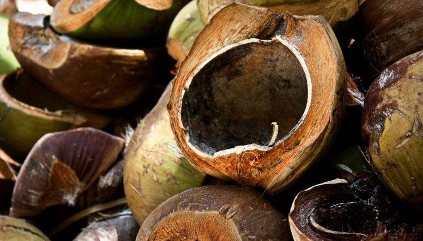 La scienza studia le noci di cocco per proteggere le case dai terremoti