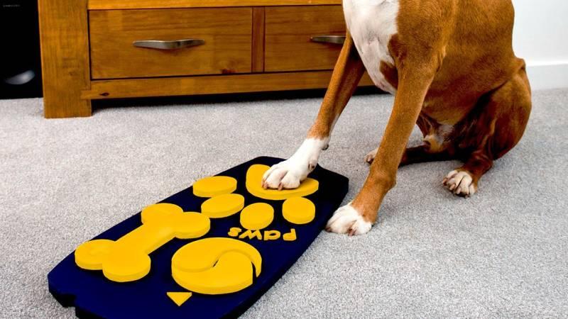 Paw, il telecomando per cani, il potere della tv al vostro cucciolo