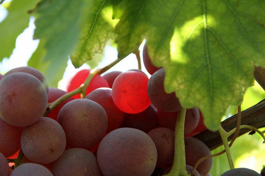 La frutta più cara del mondo? Costa 1 milione di Yen, in Giappone