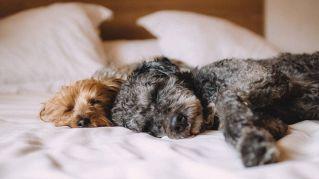 Cucciolo indemoniato? Una spa per cani offre l'esorcismo di gruppo