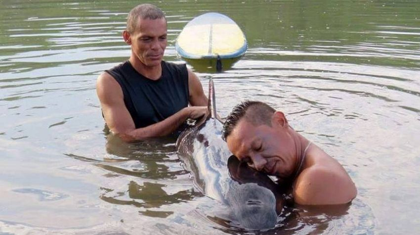 Surfisti salvano piccolo di balena bloccato alla foce di un fiume