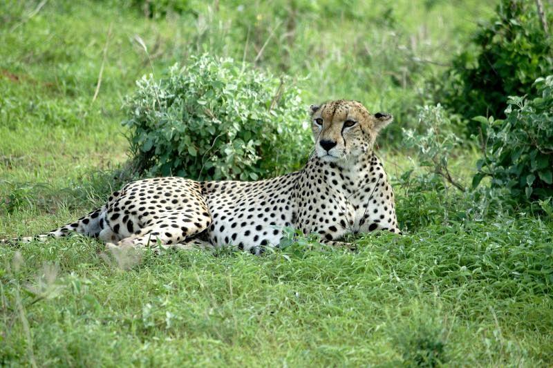 Il ghepardo Gabriel e lo zoologo, un'amicizia speciale