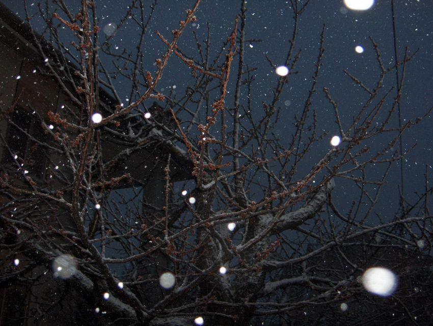 Che differenza c'è tra neve e pioggia nel ciclo dell'acqua