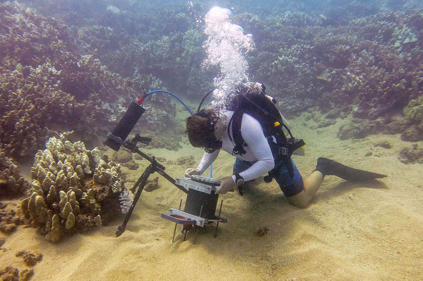Inventato il microscopio subacqueo, scopriremo un nuovo mondo marino