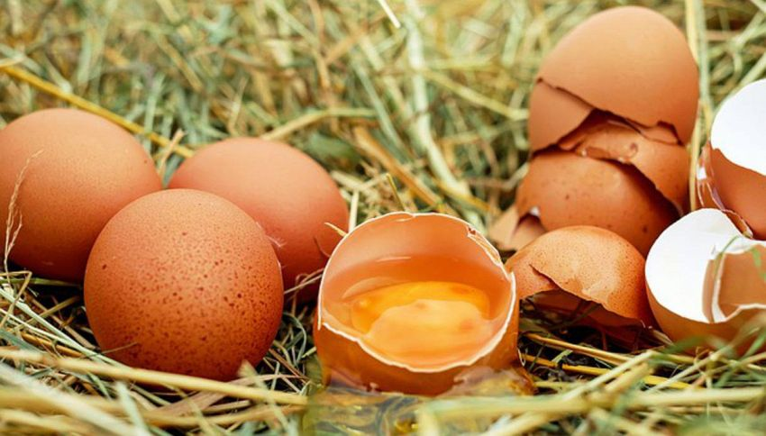 Non buttarli! Riciclo originale dei gusci d'uova