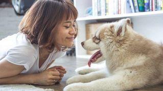 10 cose che gli uomini fanno ai cani ma che a loro danno fastidio