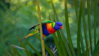Classifica dei pappagalli più belli del pianeta in assoluto