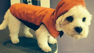 Idee per realizzare semplici vestiti fai da te per cane