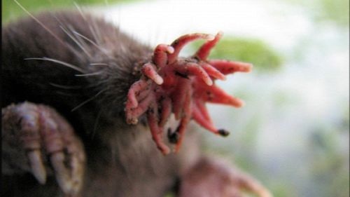 Animali o demoni? 10 pazzesche creature da incubo