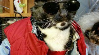 I gatti sono i migliori cosplayer. Ecco le prove