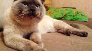Questo gatto diventerà sindaco e avrà una sua banconota
