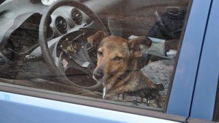 Cane alla guida, schianta l'auto contro supermercato
