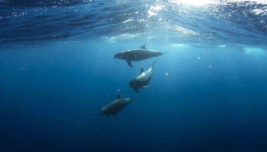 Ecco come i droni aiuteranno a salvare delfini e balene