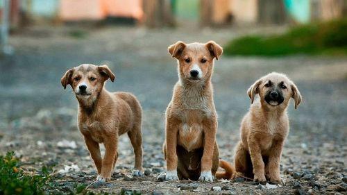 Ora i cani possono scattarsi un selfie e inviarlo col cellulare
