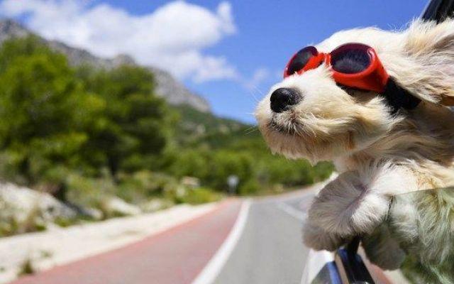 Animali in vacanza, gli oggetti che non puoi dimenticare