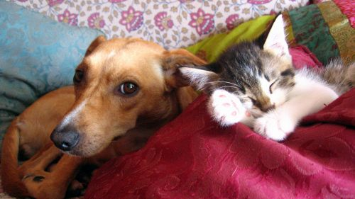 Tenerezza infinita: il gatto, il cane e le scale