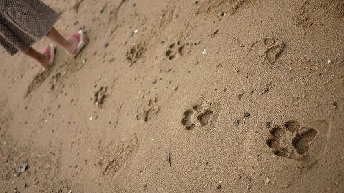 Arrivano dal Giappone i sandali che lasciano le impronte degli animali