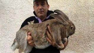Giosuè è un coniglio da record. Ecco quanto pesa