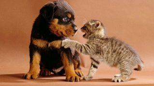 Gatti contro cani: quale animale vince su internet?