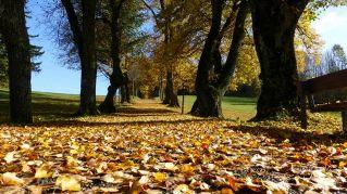 Gli alberi hanno sentimenti, parlano tra loro e diventano amici