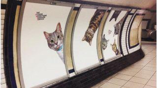 La metro di Londra è stata invasa da teneri gattini