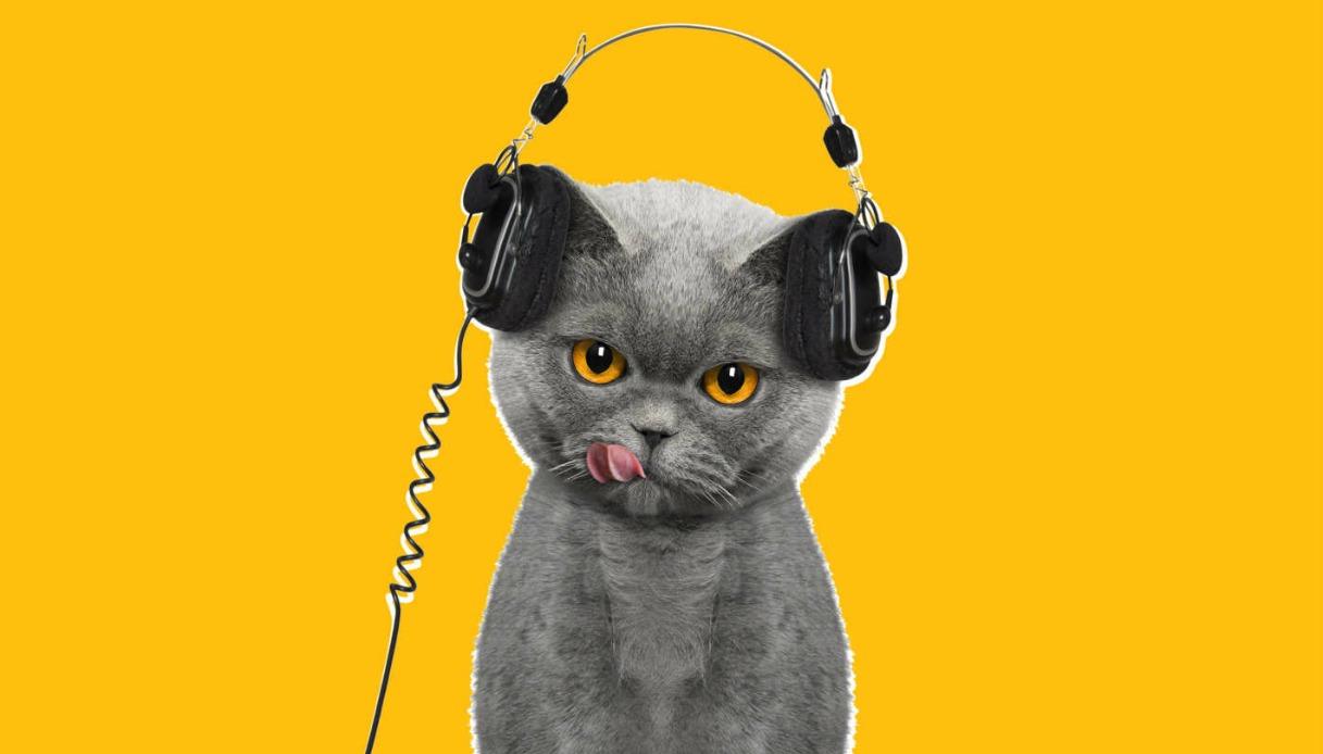 Musica per gatti: un'etichetta discografica lancia la playlist felina