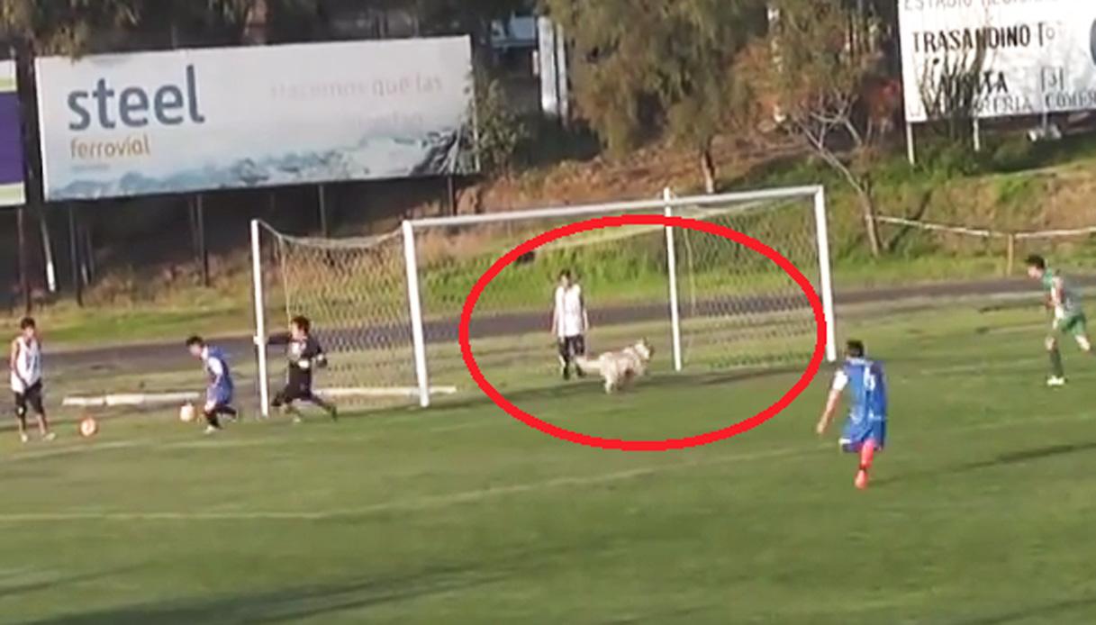 Cane entra in campo e sventa il gol. Portiere su tutte le furie
