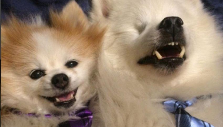 Cucciolo adotta cane cieco per fargli da guida. Ora sono inseparabili