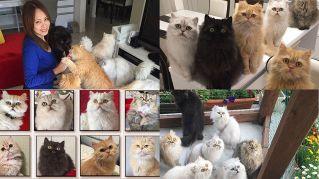 La gattara che spopola su Instagram con i suoi 12 persiani