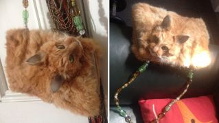 Il gatto borsetta: l'opera dell'imbalsamatore disgusta il web