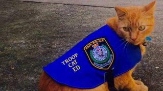 In Australia arriva il primo gatto poliziotto