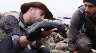 Nera e gigantesca, la lumaca di mare è da film horror