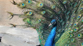 Molto più di uno zoo: il paradiso zen degli animali