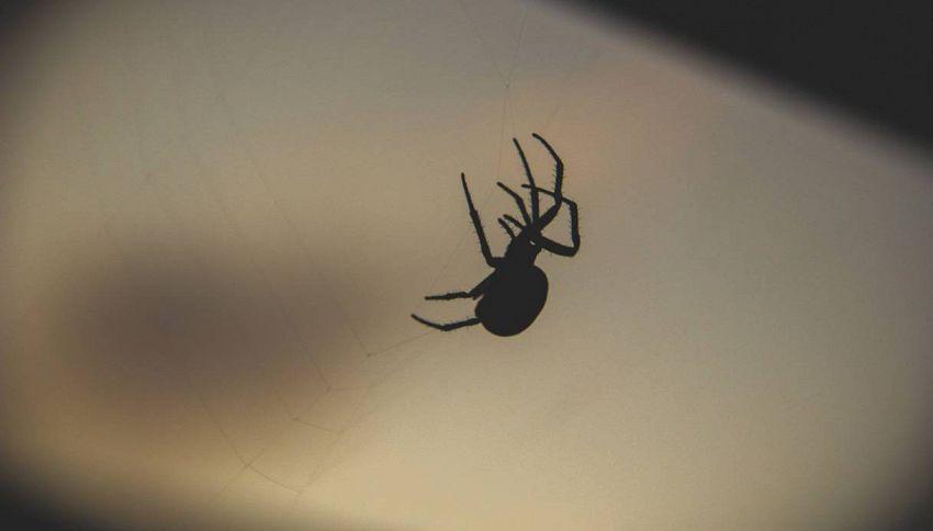 Avete paura dei ragni? Ecco come farla passare