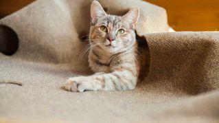 Il tappeto per gatti è irresistibile, impossibile non giocare