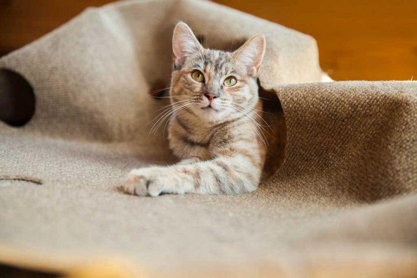 il tappeto per gatti irresistibile impossibile non